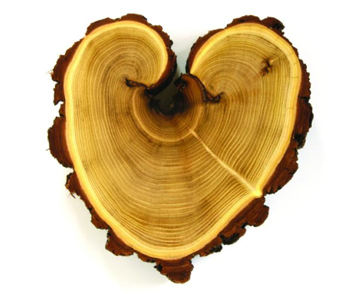 cross-section of a tree trunk shaped like a heart